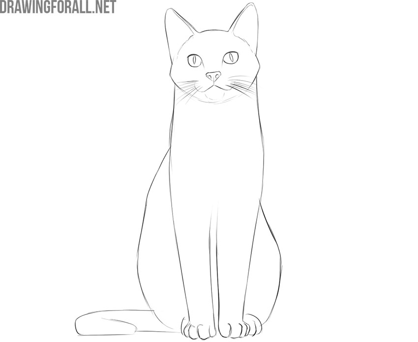 how to draw a cat sitting down