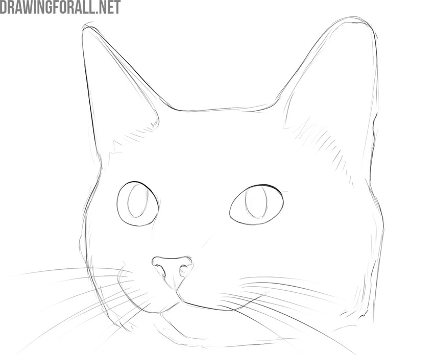 how to draw a cute cat step by step