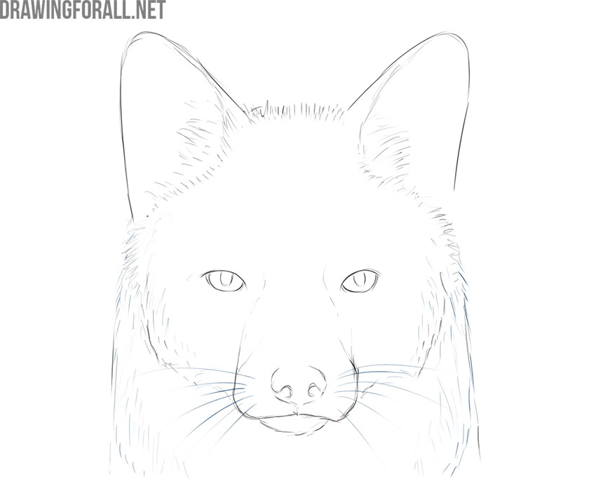 how to draw a fox face easy