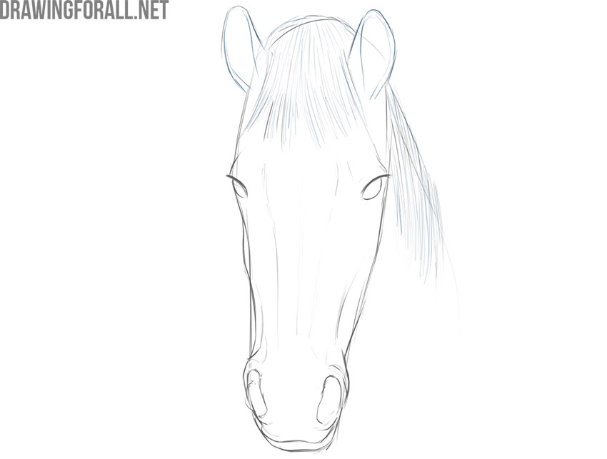 how to draw a horse face for beginners