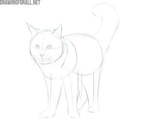 how to draw a maine coon