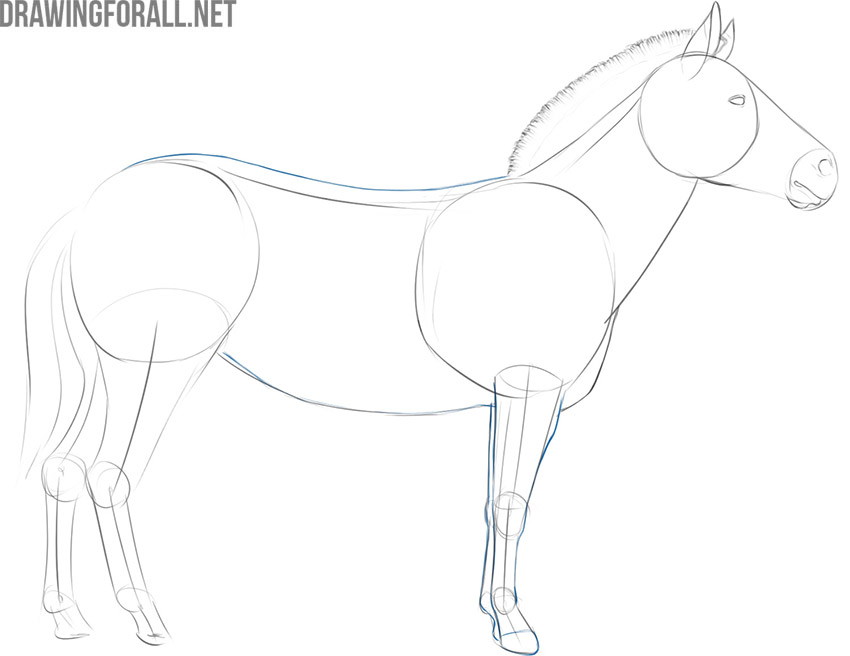 how to draw a zebra body