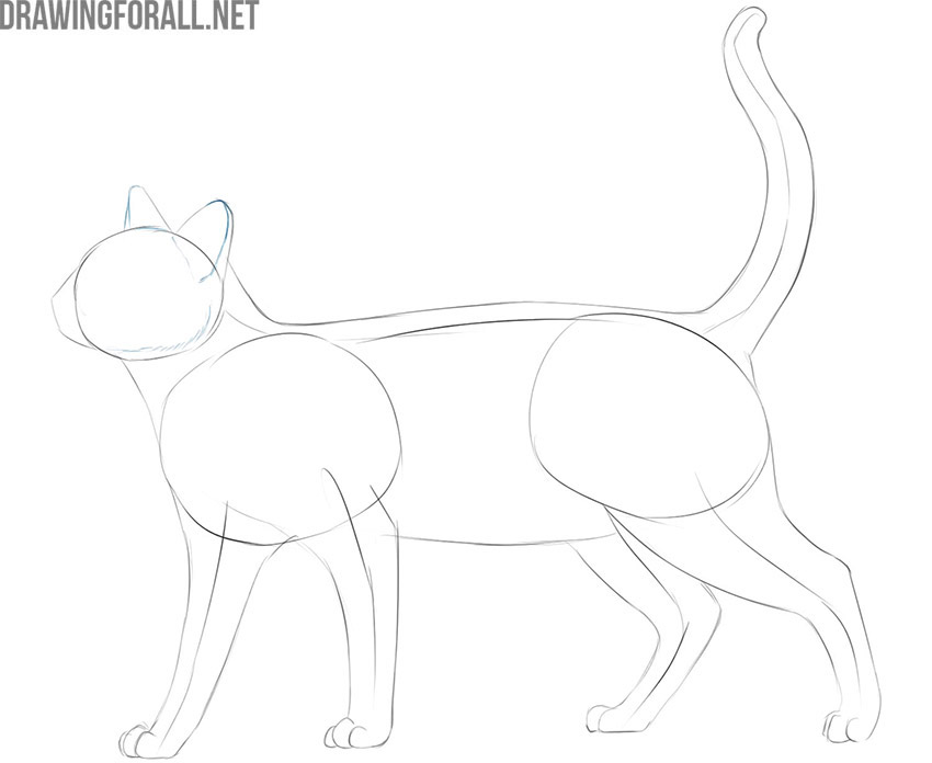 how to draw a cat easy step by step for beginners