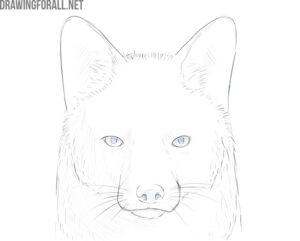 how to draw a fox face step by step