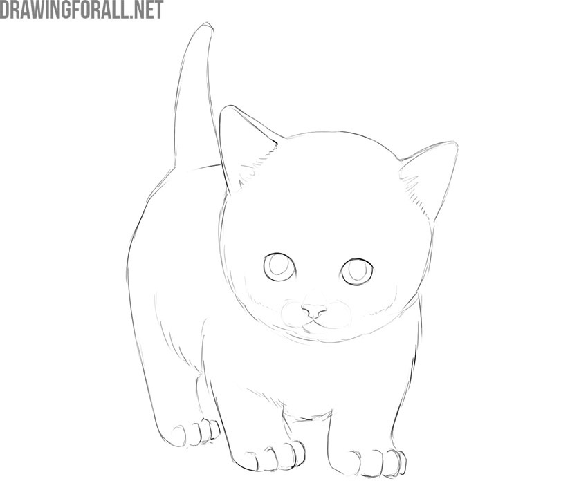 how to draw a kitty cat step by step