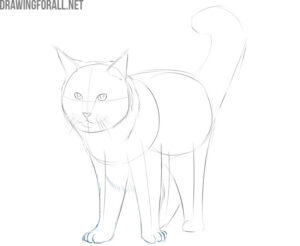 how to draw a maine coon cat step by step