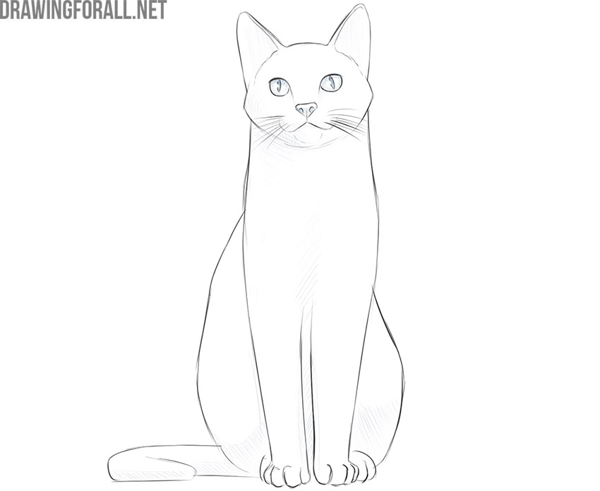 how to draw a sitting cat step by step