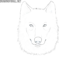 how to draw a wolf face easy