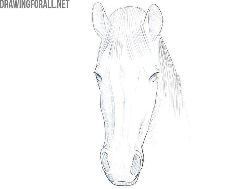 how to draw a horse face step by step