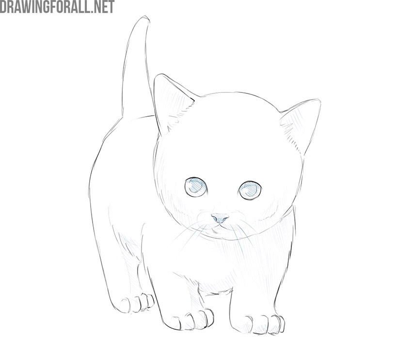 how to draw a kitty cat easy