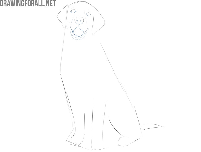 how do you draw a sitting dog