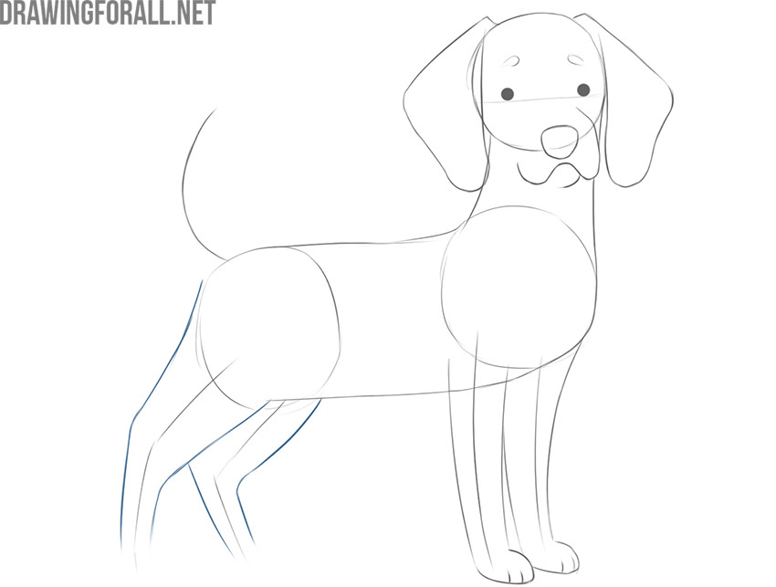 how to draw a cartoon dog face