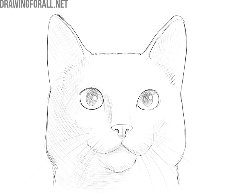 How To Draw A Cat Face Drawingforall Net