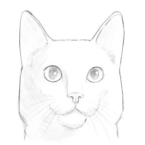 how to draw a cat face