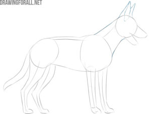 how to draw a dog body