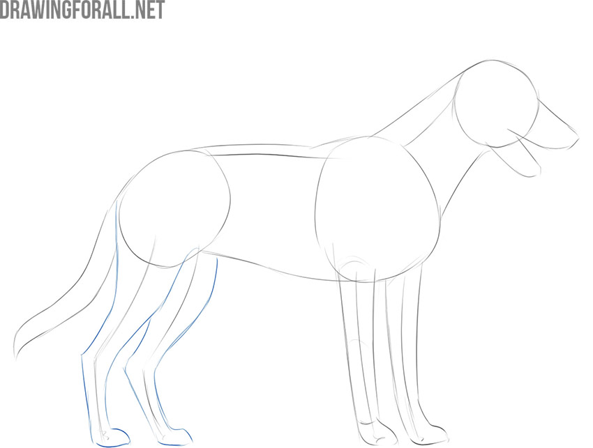 how to draw a dog easily
