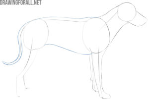 how to draw a dog easy and fast