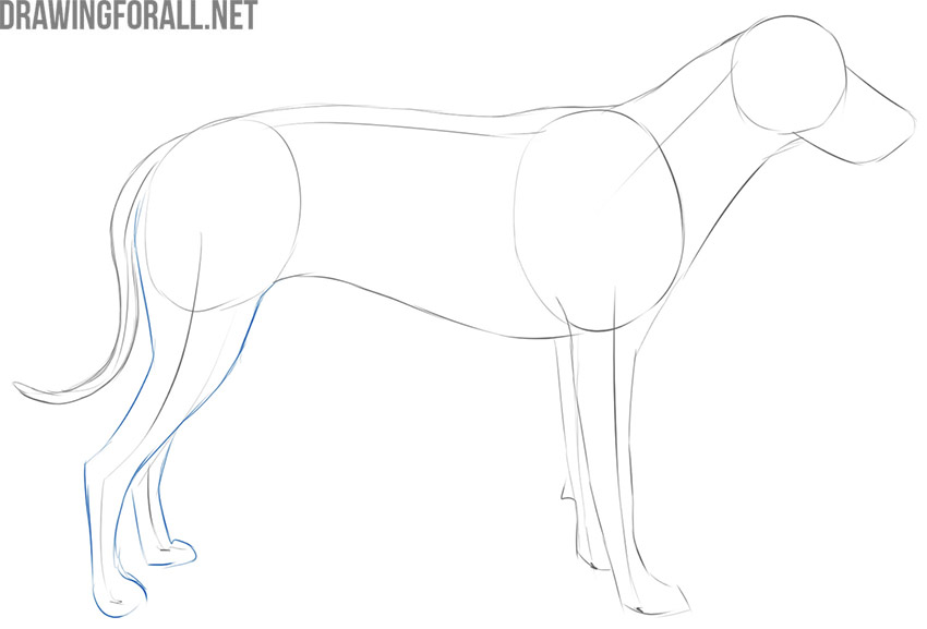 how to draw a dog easy for beginners
