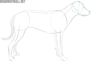 how to draw a dog easy step by step for beginners