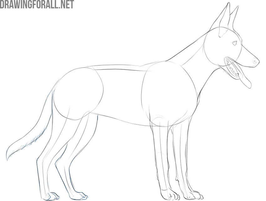 how to draw a dog easy