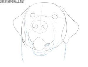 how to draw a dog face easy