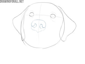 how to draw a dog face for beginners