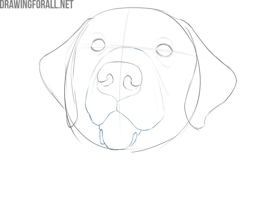 how to draw a dog face realistic