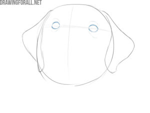 how to draw a dog face step by step easy