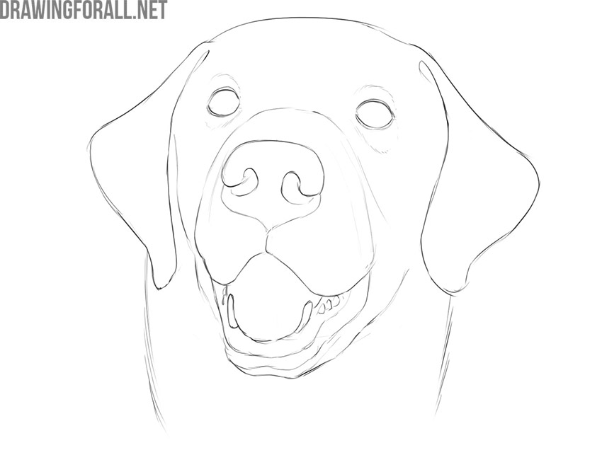 how to draw a dog face step by step