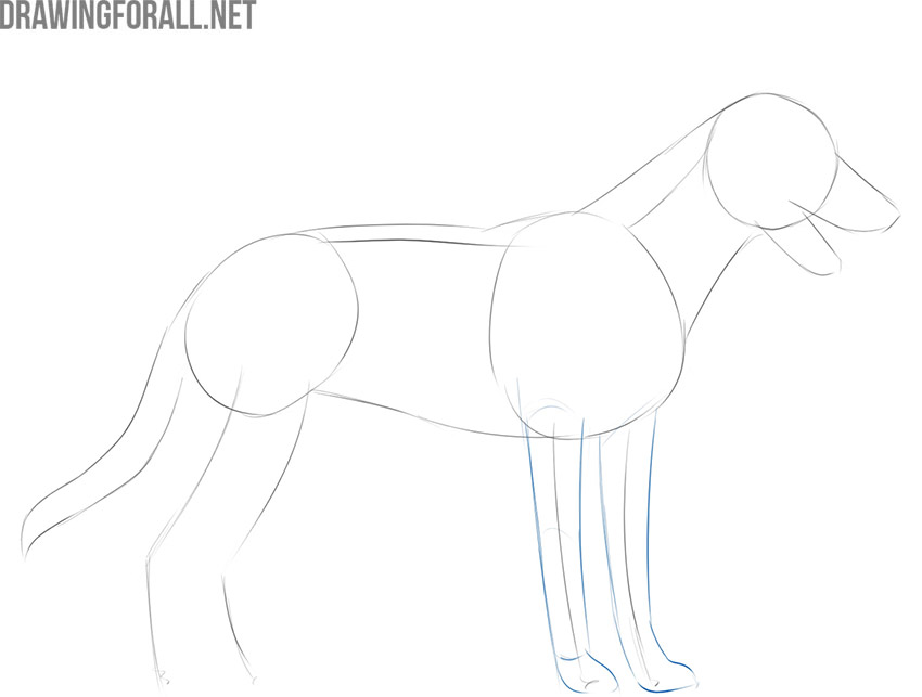 how to draw a dog for beginners