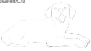 how to draw a dog laying down step by step
