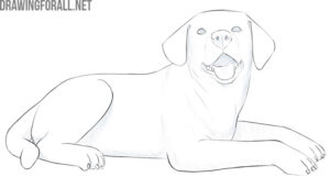 how to draw a dog lying down