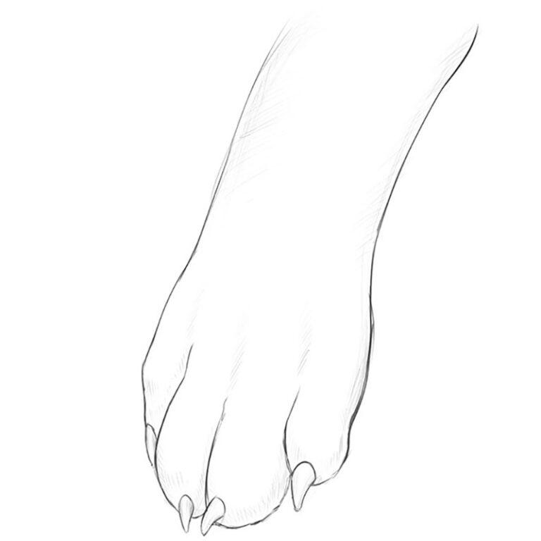 How to Draw a Dog Paw