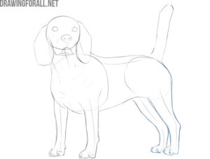 how to draw a dog realistic and easy