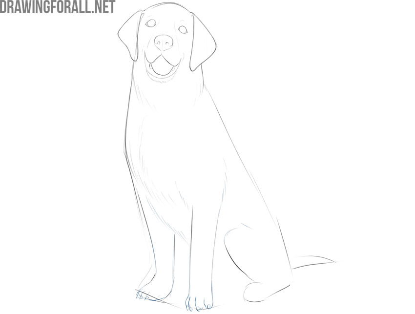 how to draw a dog sitting down easy