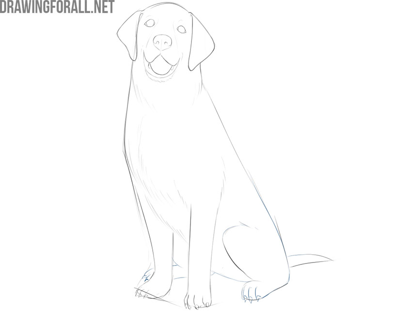 how to draw a dog sitting down