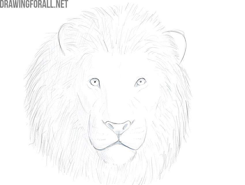 how to draw a lion face easy