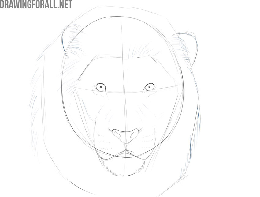 how to draw a lion face step by step