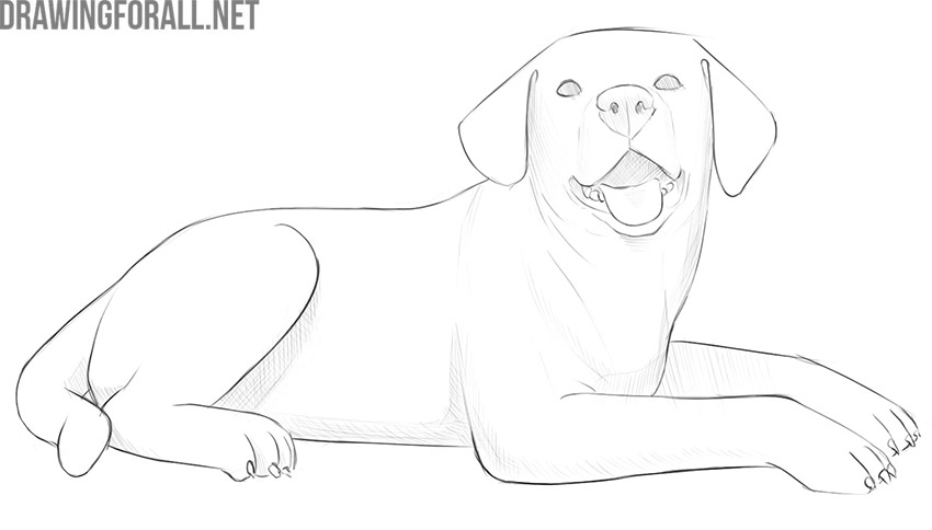 how to draw a lying dog