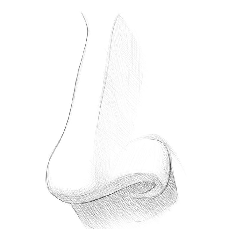 How to Draw a Nose From the 3/4 View