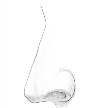 How to Draw a Nose From the Side