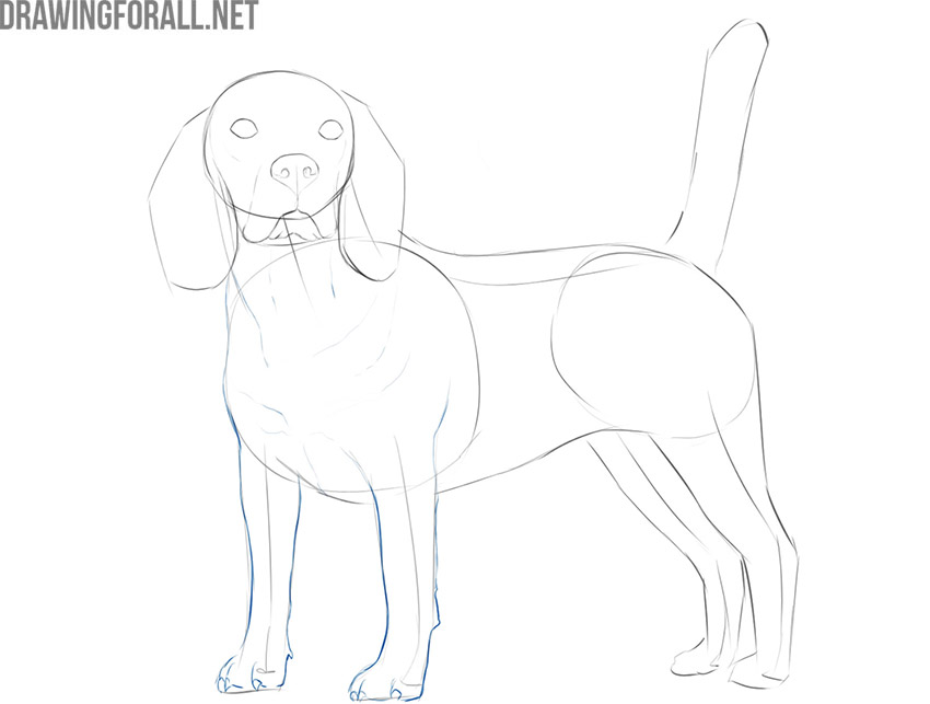 how to draw a realistic dog easy step by step