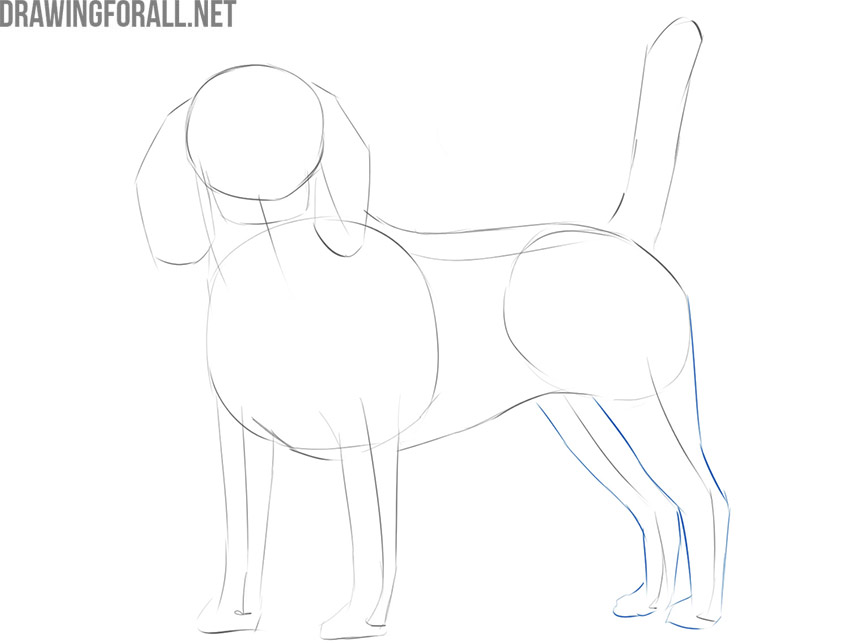 how to draw a realistic dog easy