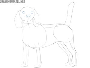 how to draw a realistic dog face for beginners