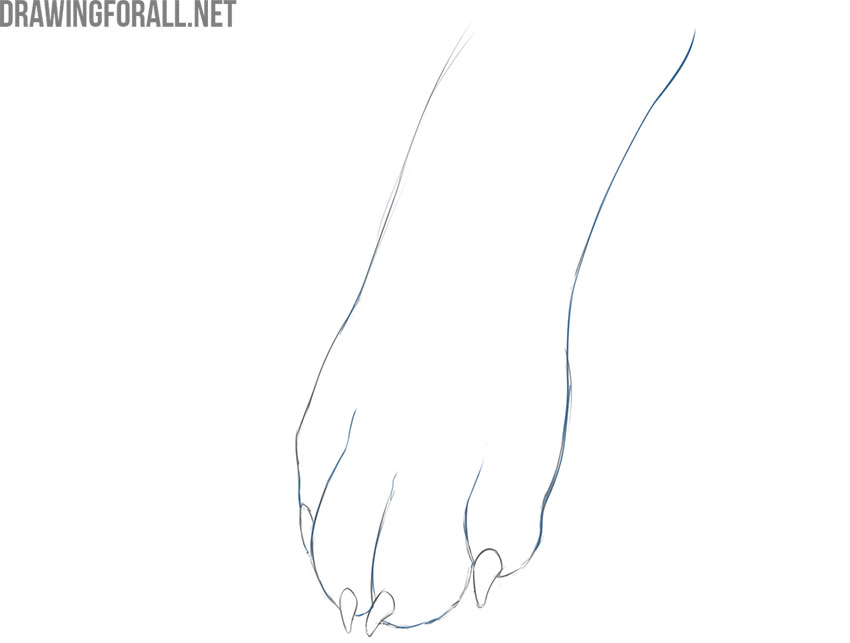 how to draw a realistic dog paw