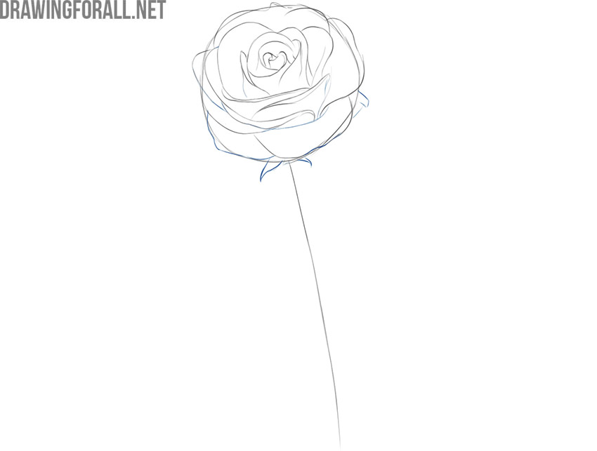 how to draw a rose flower easily