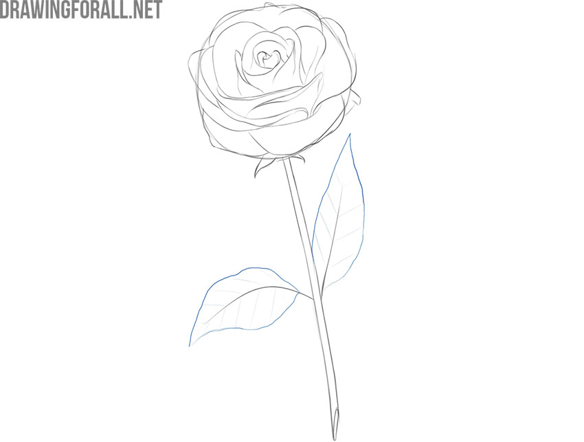 how to draw a rose flower easy