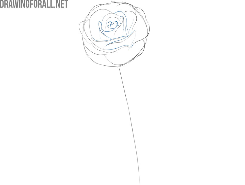 how to draw a rose flower for beginners