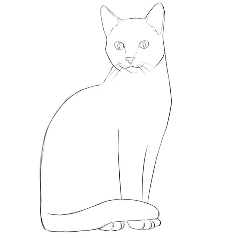 How to Draw a Simple Cat