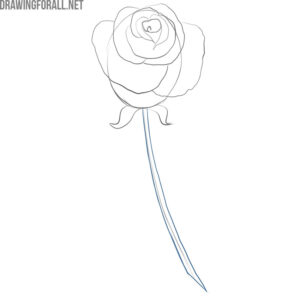 how to draw a simple rose bud